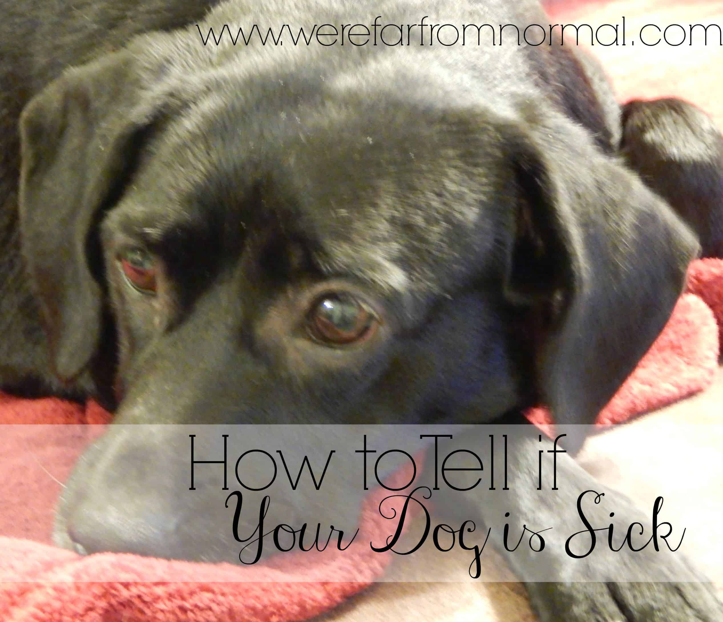 how to tell if your dog is sick, signs of a sick dog
