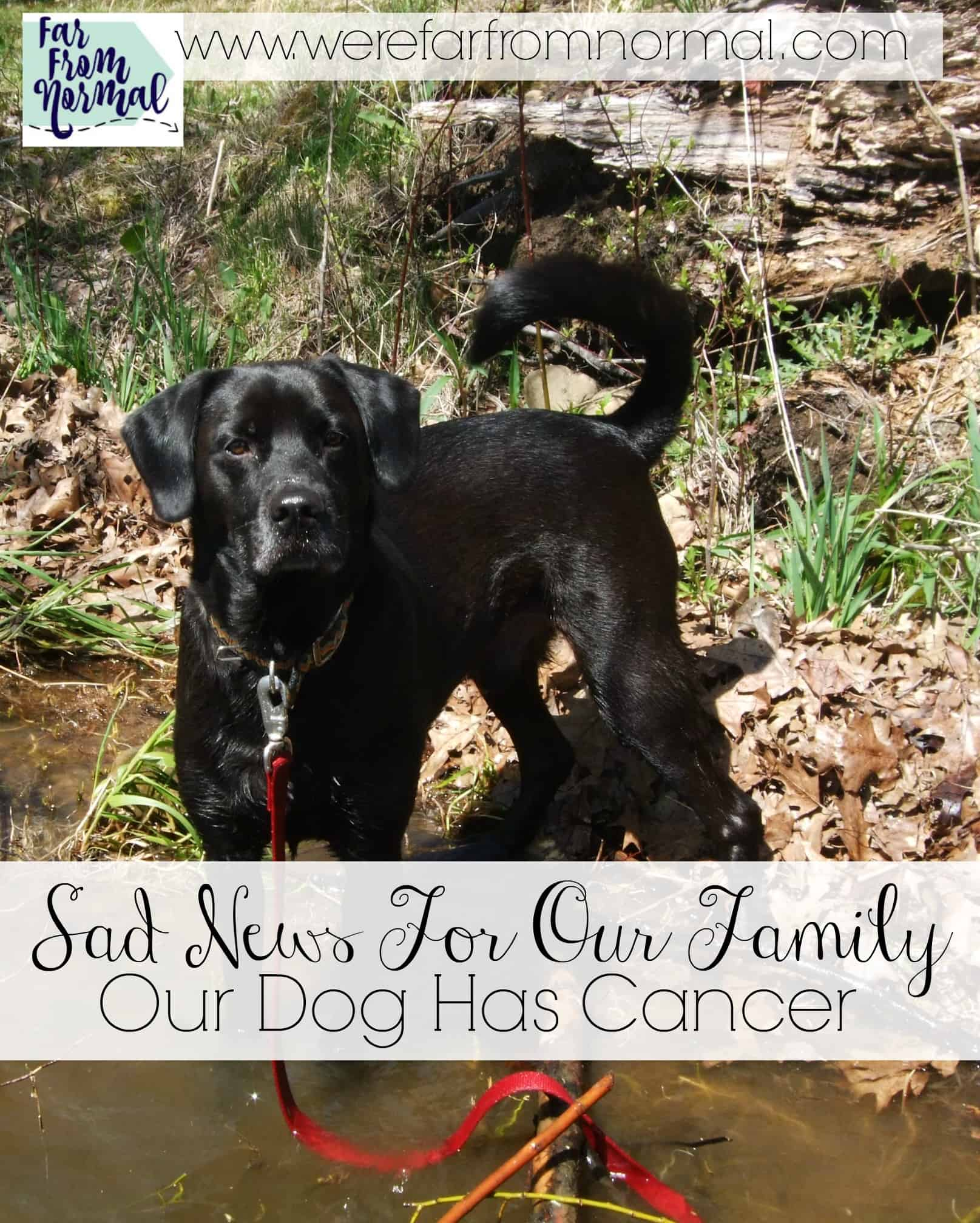 Sad News For Our Family- Our Dog Has Cancer