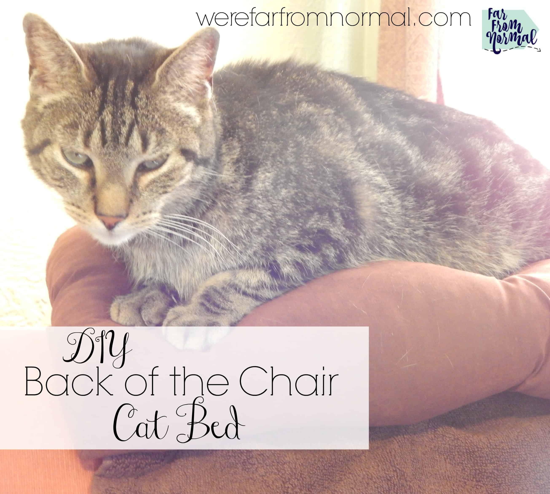Strange Diy Back Of The Chair Cat Bed Far From Normal Customarchery Wood Chair Design Ideas Customarcherynet