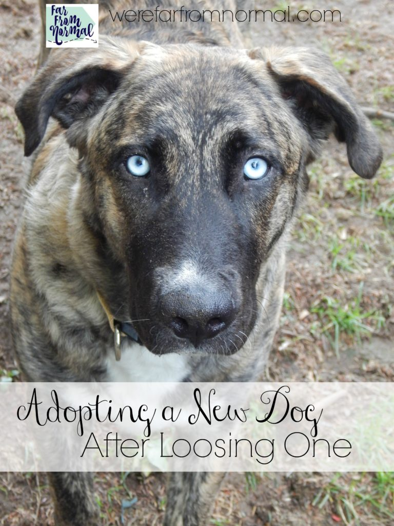 adopting-a-new-dog